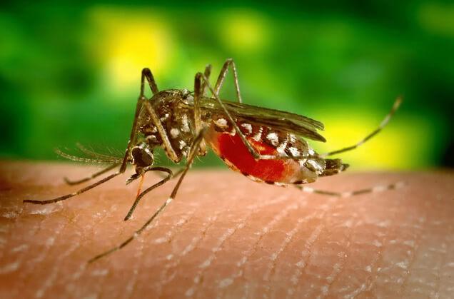 蚊蟲入侵家中